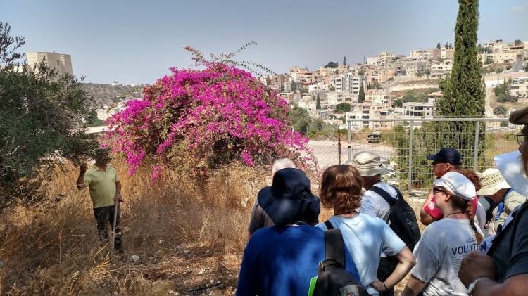 mar elias olive grove day three